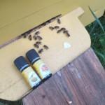 Виды меда и эфирные масла