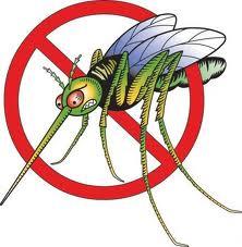 Масло мелиссы от комаров
