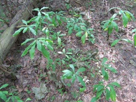 Незнакомое растение в лесу на берегу озера.