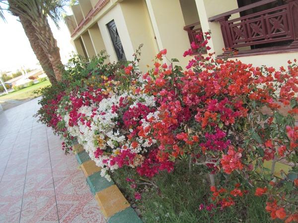 отдых в Хургаде в феврале