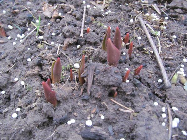 работа в саду весной