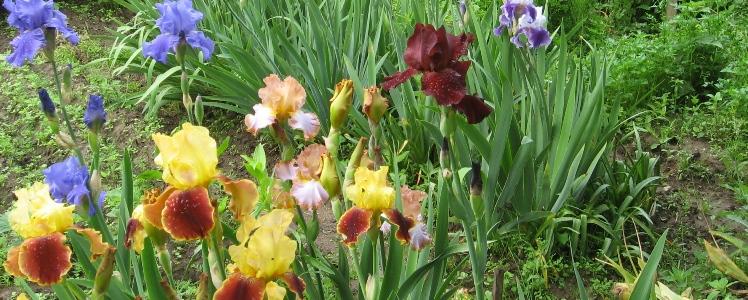 ароматы и цветы