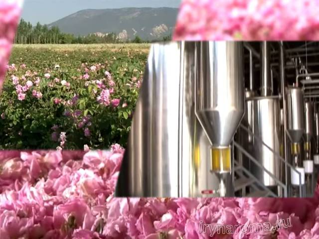 розовое масло из лепестков
