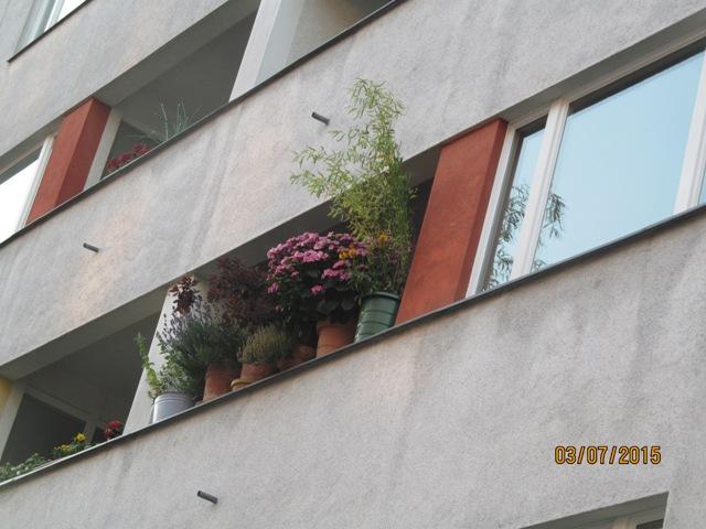 цветы берлина