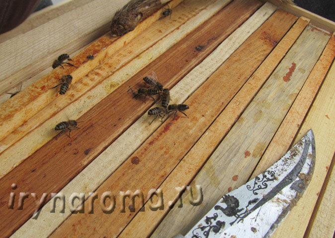 прополис продукт пчеловодства