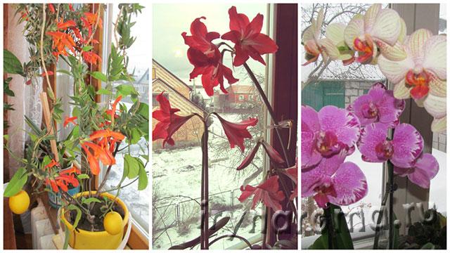 домашние цветы в феврале