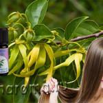 масло иланг-иланг для волос