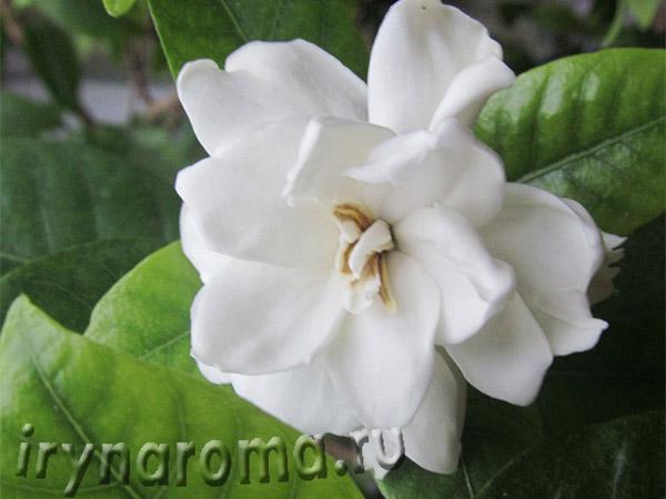 экзотические ароматы