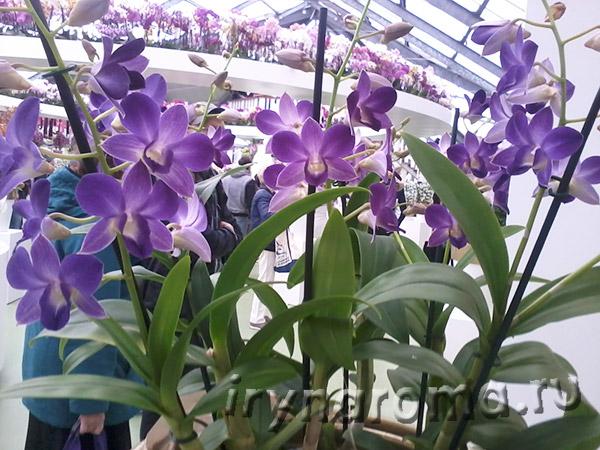 орхидеи в павильоне Беатрикс