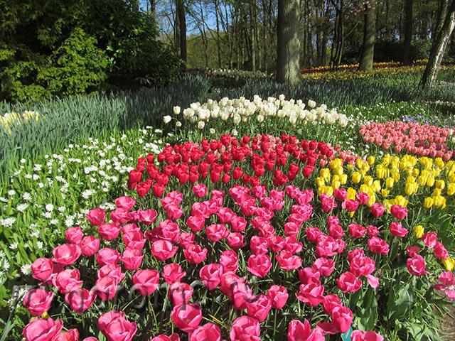 Парк тюльпанов Кёкенхоф.