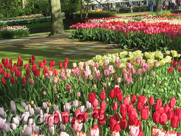 парк тюльпанов Амстердам