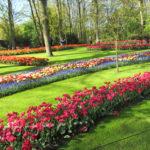 Парк тюльпанов Кёкенхоф Нидерланды