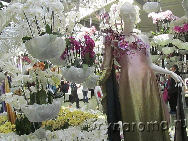 павильон орхидей в парке кёкенхоф