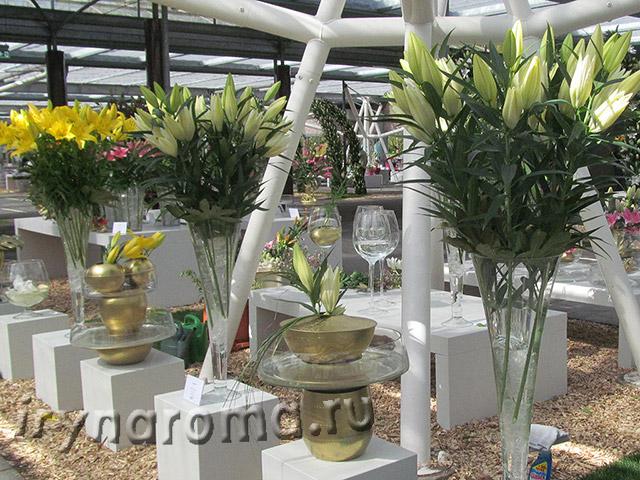 выставки цветов в парке Кёкенхоф