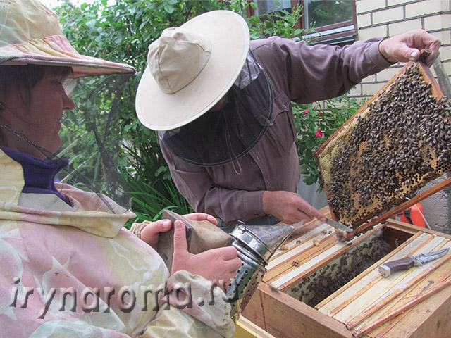 пасека мед