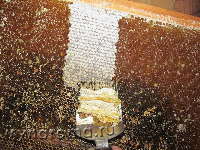 когда откачивают мед