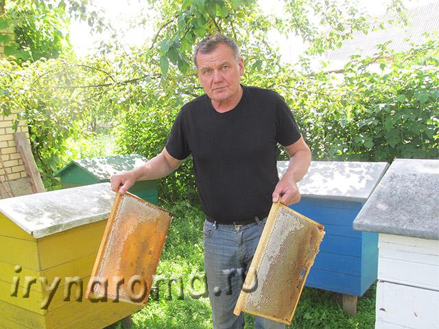мед пчелы пасека