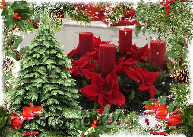 растения символы рождества