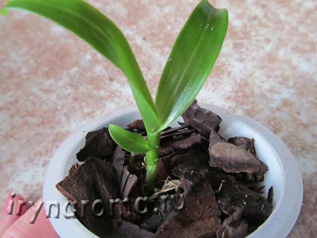 орхидея грунт для пересадки