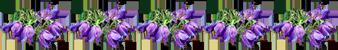 цветы полоска