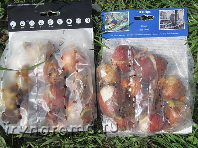 где хранить луковицы тюльпанов
